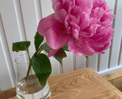 Blumen Psychotherapie Schulten